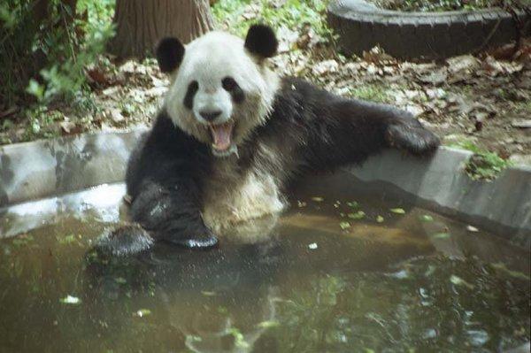 động vật tắm